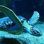Majestätische Schildkröte