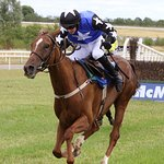 Limerick Racecourse Foto