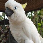 Photo of Bali Bird Park
