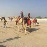 Gulf Adventures Day Tours resmi