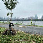 Foto van Charles River Bike Path