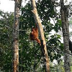 Photo of Semenggoh Nature Reserve