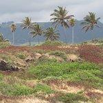 Punaluu Black Sand Beach의 사진