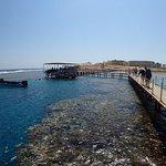 Bild från Coraya Divers Coraya Bay