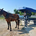 Our wagons are in excellent condition, and our local guides give the best wagon tours in Ethridg