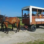 Our knowledgeable, local guides give the BEST wagon tours in Ethridge!
