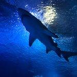 Foto van Oceanografic Valencia
