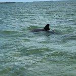 Bild från Wild About Dolphins