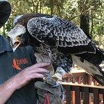 صورة فوتوغرافية لـ Radical Raptors