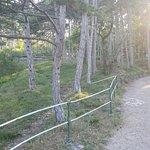 Kurpark Foto