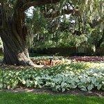 Foto di Brookgreen Gardens