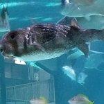 Foto van Florida Keys Aquarium Encounters