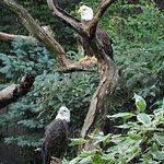 Foto de National Aviary