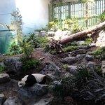 panda indoor enlosure