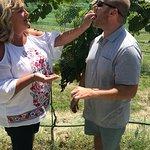 Zdjęcie Off the Vine Wine Tours