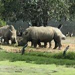 野生動物世界照片