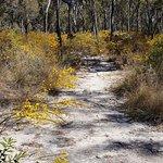 Foto de Blackdown Tableland National Park