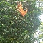 Borneo Dream Travel & Toursの写真