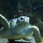 Bilde fra Haus des Meeres - Aqua Terra Zoo