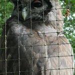 Billede af World of Owls