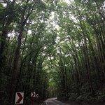 Photo of Mahogany Forest