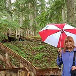 Foto Giant Cedars Boardwalk Trail