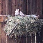 Windmill Hill City Farm fényképe