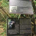 صورة فوتوغرافية لـ Gibbon Rehabilitation Project