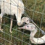 Matlock Farm Park照片