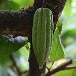 Foto de IXCACAO Maya Belizean Chocolate