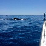 Photo of Ocean Dynamics