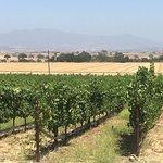 صورة فوتوغرافية لـ Kalyra Winery