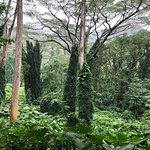Foto Manoa Falls