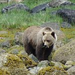 Photo of Tide Rip Grizzly Tours