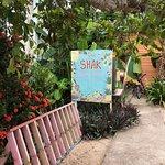 Photo de The Shak Beach Cafe