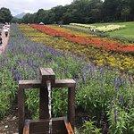 Tambara Lavender Park의 사진