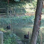 Parco Arcadia Foto