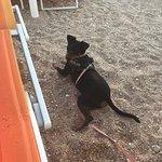La nostra cagnolina si è trovata benissimo e ha anche fatto amicizie!