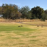 Lost City Golf Courseの写真