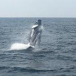 Newburyport Whale Watch Photo