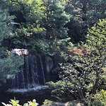 Photo of Anderson Japanese Gardens