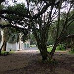 Foto di Destrehan Plantation
