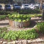 Foto de Burle Marx Park
