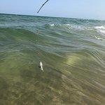 帕德里島國家海濱照片