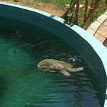 Photo of National Mexican Turtle Center