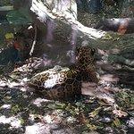 صورة فوتوغرافية لـ Africam Safari