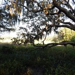 Zdjęcie Little Talbot Island State Park