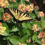 Foto de Daniel Stowe Botanical Garden