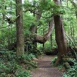Interesting hike thru the rainforest.