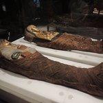 Exposição Mumias